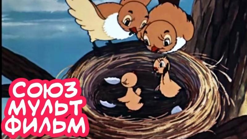ПРЕЛЕСТНЫЙ МУЛЬТИК! Кукушка и Скворец Союзмультфильм. Советские мультики для детей