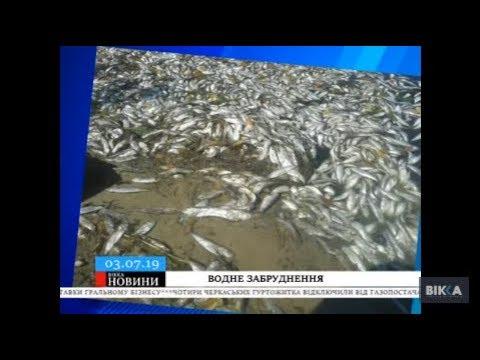 Табу на купання та рибний мор екологи підтвердили забруднення канівського узбережжя