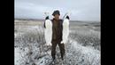 18 Охота на зайца в Якутии Yakutia