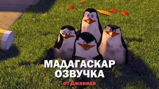"""Джавид - Король Озвучка on Instagram: """"АЭ! Пингвин оглы пачиму ишака не брали? 🐧 🦓 • #рустаммайер #джавид #джавидозвучка #озвучкаджавид #озвучка"""""""