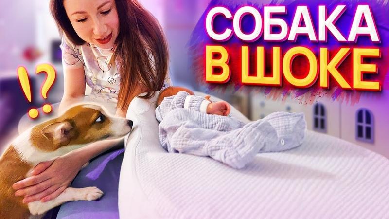 ПЕРВАЯ РЕАКЦИЯ Собаки Джины на Малыша Спарти Elli Di Pets
