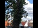 Таллин в Таллине прогулка по старому городу
