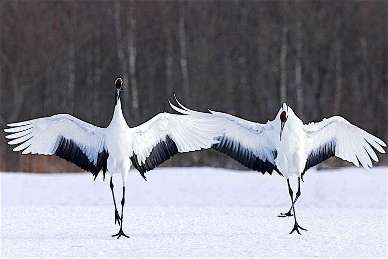 Красота дикой природы, изображение №13