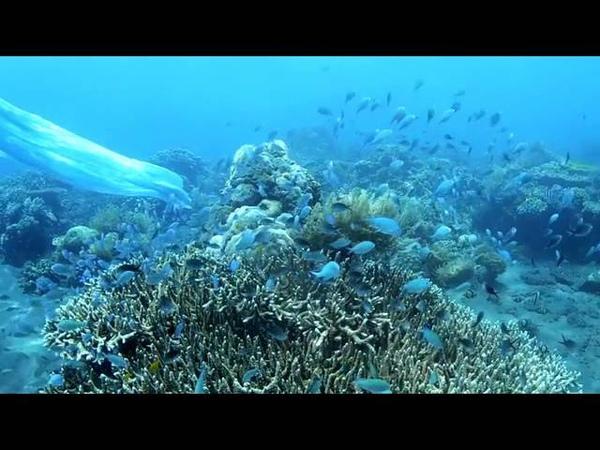 Apsara, spirits of the sea