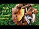 Сентябрьская Волшебная Осенняя Грибная Поляна Грибы Заметка Обывателя