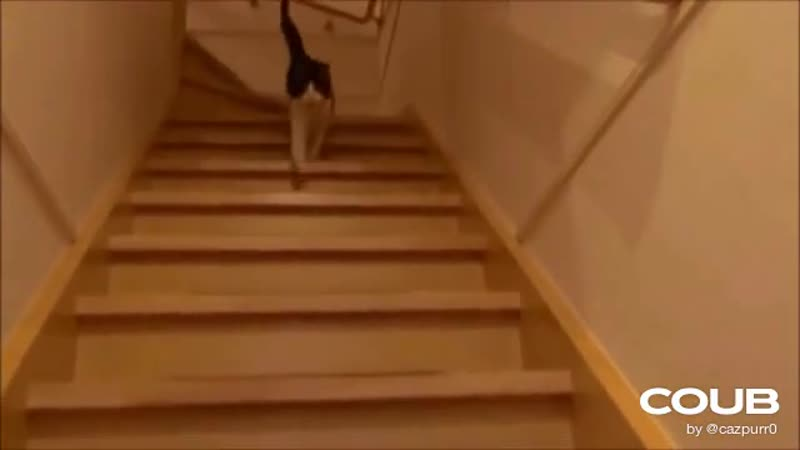Cats meet their owners after long time