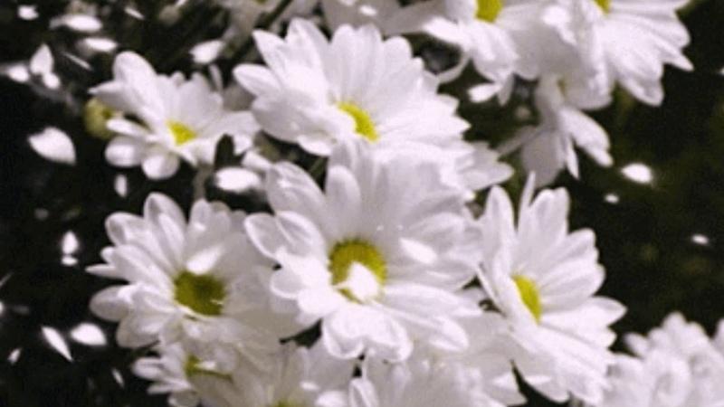 Весенний калейдоскоп цветов и красивая Французская музыка - Tombe la neige