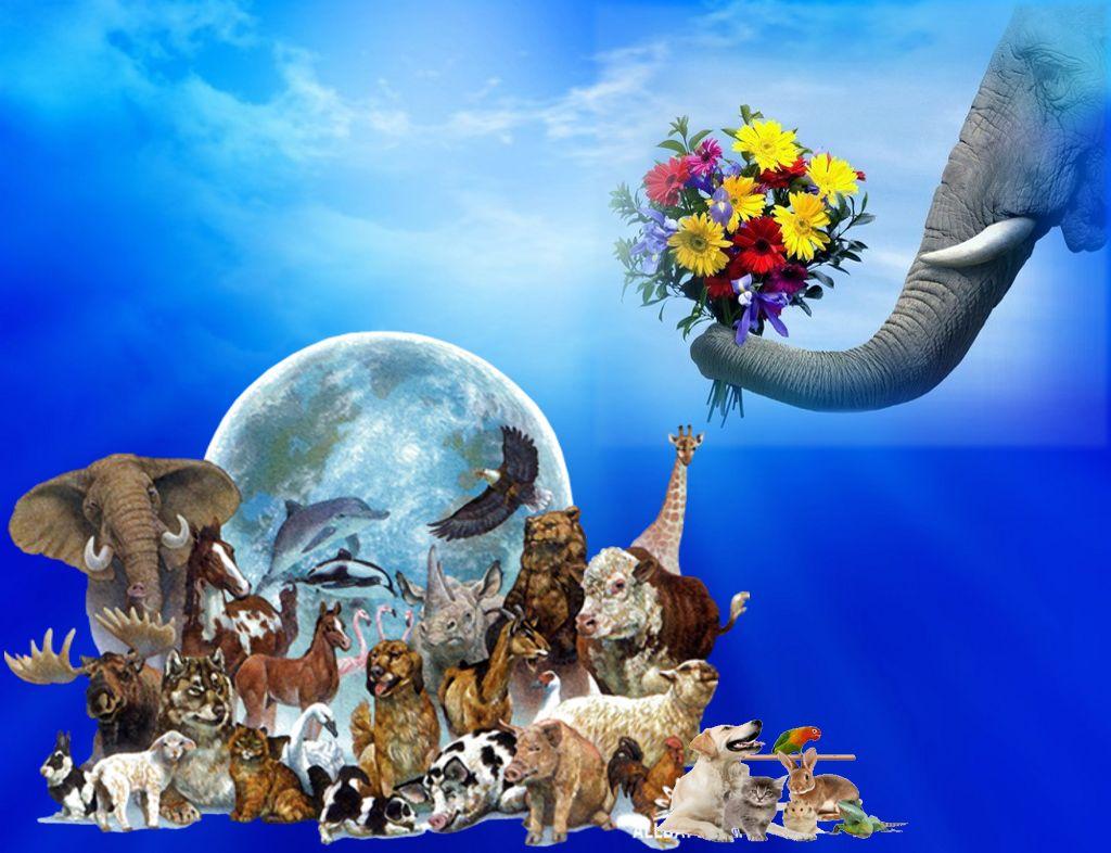 Картинка к дню защиты животных