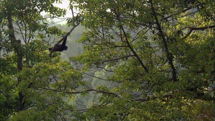 BBC Жизнь 10 серий из 10 Life 2009 Серия 10 Приматы Primates