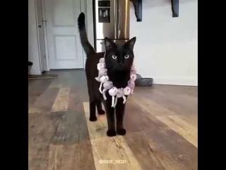 Кошачий показ мод. Петербург. Приют