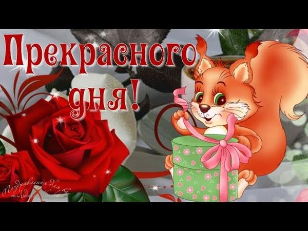 ☕️ Доброе утро 🌸 Прекрасного дня Красивая песня пожелание Музыкальная видео открытка