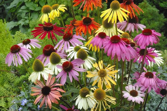 5 самых неприхотливых и красивых цветов для вашего сада