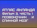 Фильм 3 Часть 1 Позвоночник и спинной мозг Атлас Акланда