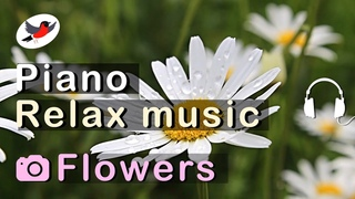 Pleasant relax music with a piano against a background of flowers 🌿 8 hours of magic non-stop