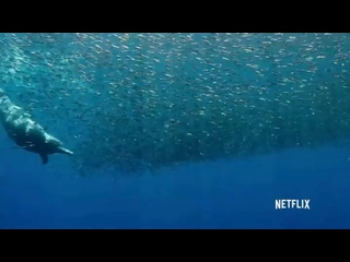 Видео от Спасаем Дельфинов - Save Dolphins