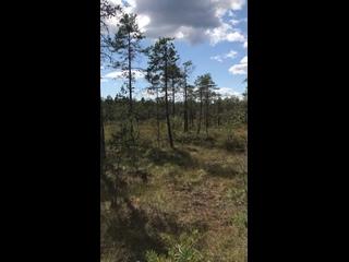 Video by Yulya Rozhkova