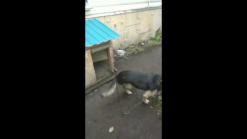 Видео от Собачья передержка Маячок Кемерово