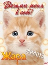 Фотоальбом Cit Cat