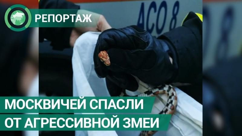 Спасатели защитили москвичей от агрессивной змеи на кухне ФАН ТВ