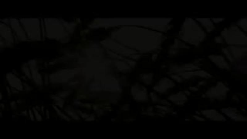 Канги — Собака