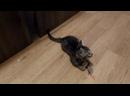 Маленькие котята 1,5 мес ищут свои дома