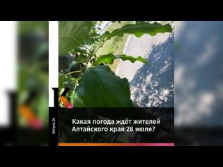 Какая погода ждёт жителей Алтайского края 28 июля?