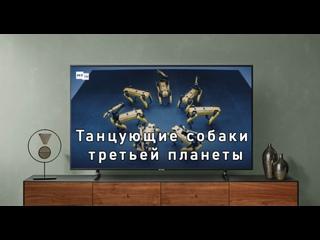Танцующие собаки третьей планеты
