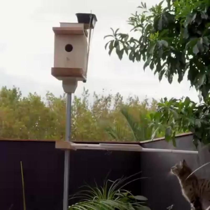 Эффективная защита птичьей кормушки от кошек