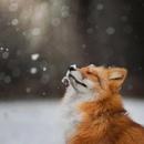 Фотоальбом Анны Артемьевой