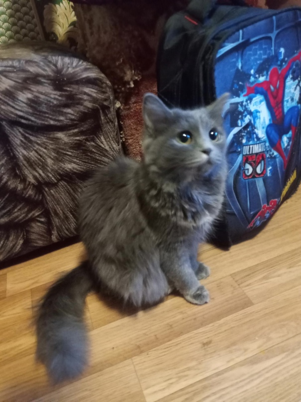 Отдам котенка в добрые руки (апрель) на 3 | Объявления Орска и Новотроицка №16757