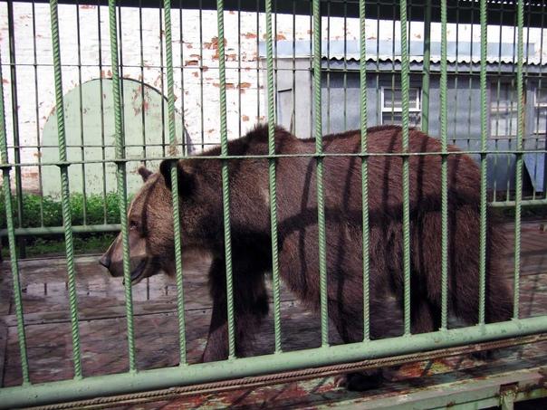 Появились подробности об отравлении медведей в чел...