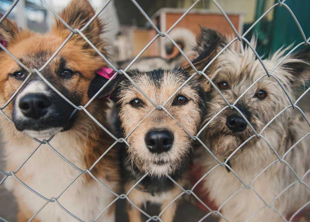 Приют для бездомных животных построят в Можге.