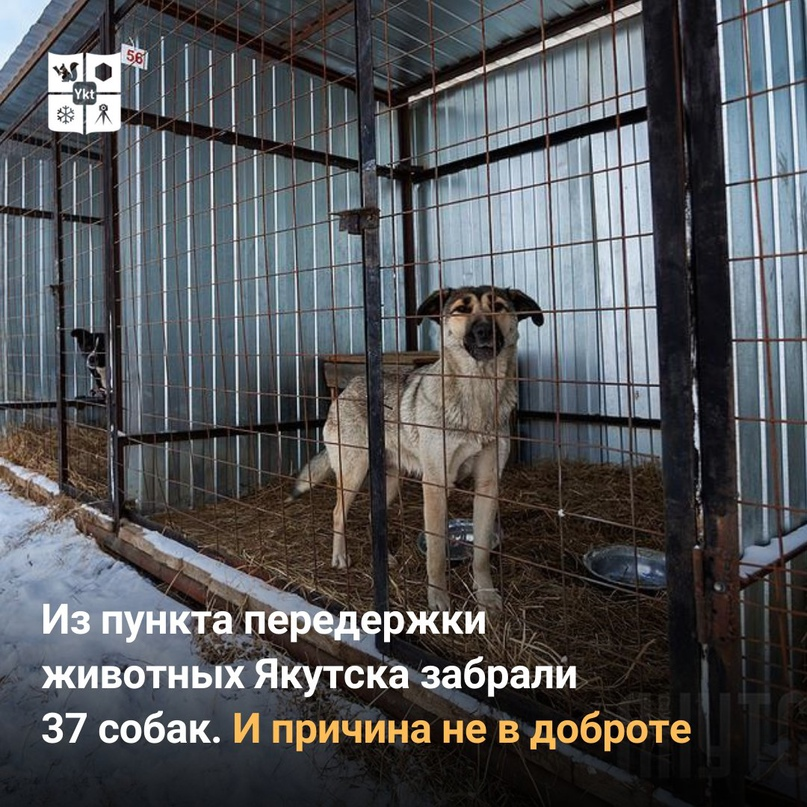 Изпункта передержки животных Якутска забрали 37 собак. Ипричина невдоброте