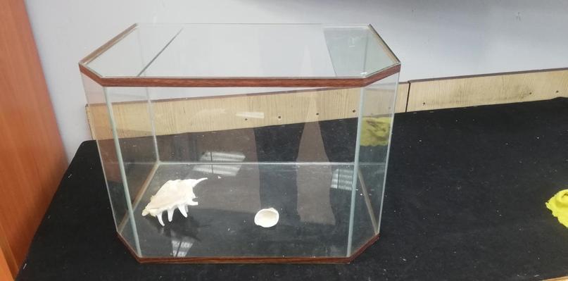 Купить аквариум на 35 литров, возможно с | Объявления Орска и Новотроицка №28575