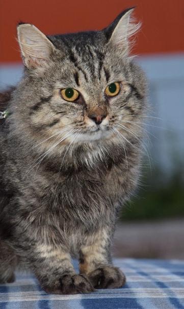 Очень хочется найти дом и любящую семью для взрослого кот...