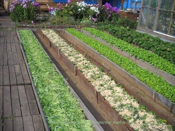 о преимуществах узких грядок. почему узкие грядки лучше на узких грядках можно выращивать практически любые овощи, в том числе и картофель. за овощными культурами на узких грядках гораздо