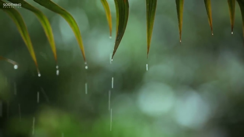 เพลงสปาผ่อนคลาย Relaxing Music Soft Rain