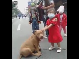 Мама, смотри какая собачка, давай себе возьмем!