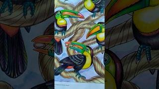 """Раскраска """"Удивительный мир животных"""",автор Патрисия Уинн. Обзор раскрашенной книги."""