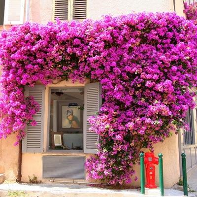 Самые невероятные букеты цветов мира фото, цветы купить в литве мотоцикл иж
