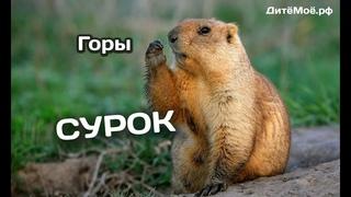 Сурок. Энциклопедия для детей про животных. Горы