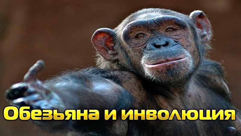 Как обезьяна произошла от человека Инволюция обезьяны ФАКТЫ