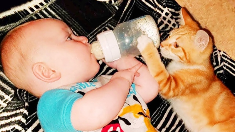 When Baby and Cats Playing and Take Care Of Each Other Best Baby Video