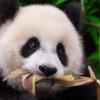 Alert Panda