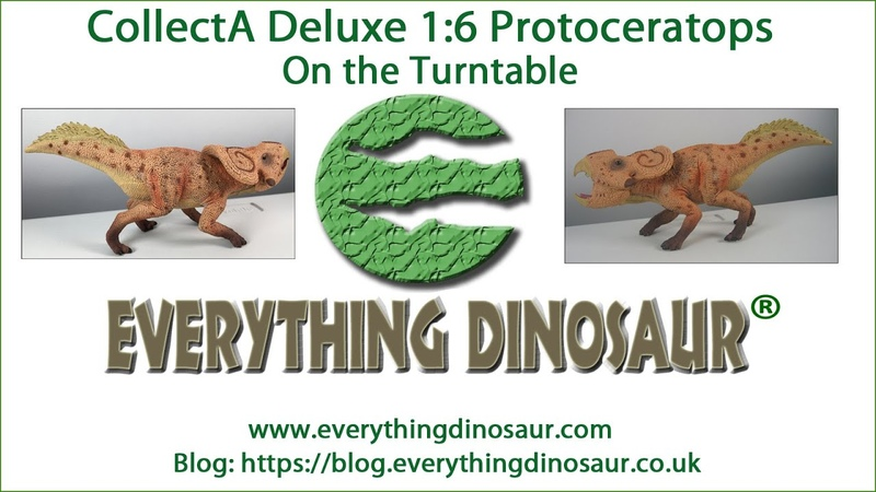 CollectA Deluxe Protoceratops Model on the Turntable