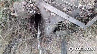 копаю клад на покинутом участке  которому 100 лет