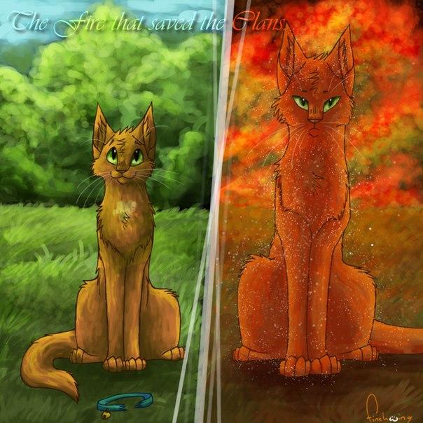 Рисунок из книги коты воители сюжет огонек и щербатая шаблон