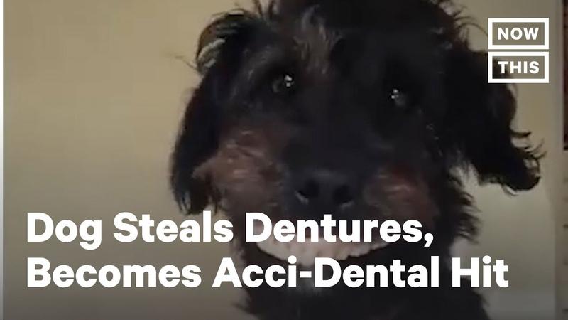 Denture Stealing Puppy Becomes Internet Sensation NowThis