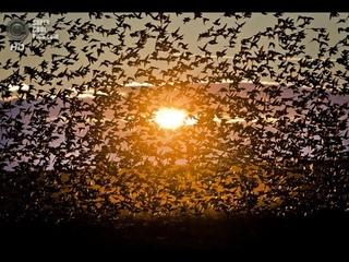 Индия. Май. Оползни. На побережье океана циклон. Птицы миллионами в стаях летят на север. Быть беде.