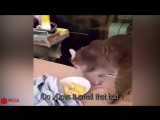 Funny Cats Reaction To Smelling Durian - Top Cats Video Compilation